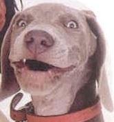 funnydog.jpg